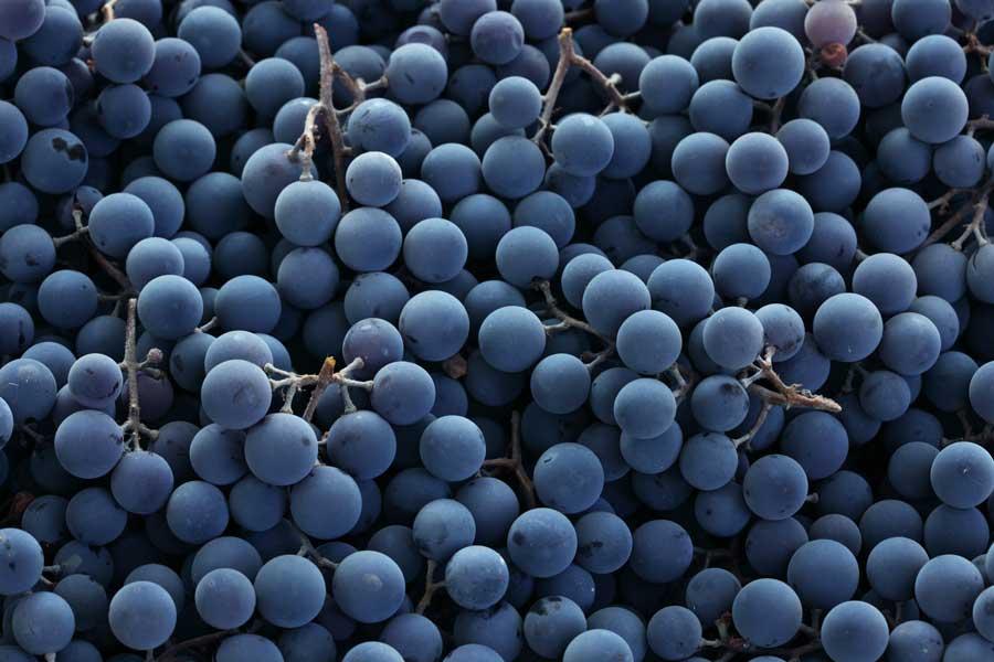 grapes black jesmond fruit barn online or pickup in store