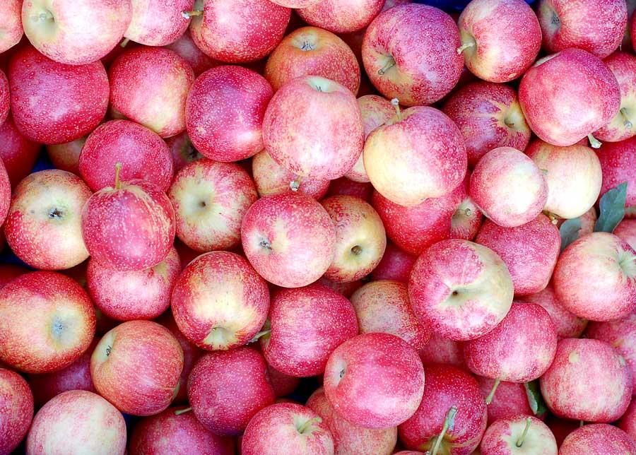 Apples (Pink Lady)   Jesmond Fruit Barn   Online or In Store