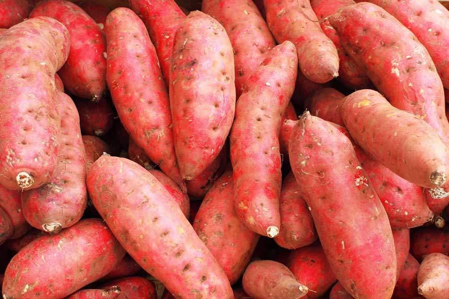 jesmond-fruit-barn-sweet-potatoe